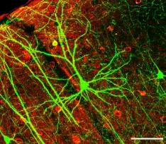 concienciados neurona biología salud